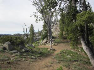 Turn off the Elk Horn Crest trail and head East.