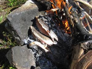 Cooking brook trout on the coals
